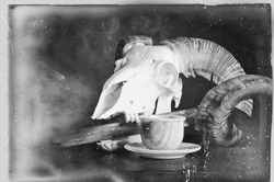 Old retro style vintage still life picture with white animal skull placed on table. Ancient blade in skull mouth. Coffee mug placed nearby. Lots of scratches and age parks on the photo film surface.