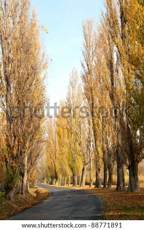 Old road leads across the autumn poplar lined at Lake Balaton (Szigliget,Hungary)