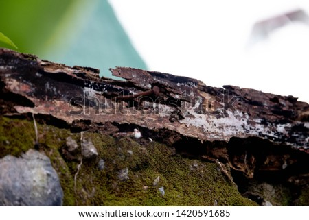 old rotten moldy weathered wood because sun expose and termite close up photo background