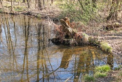 old rotten stump of a tree on the bank of a lake in the moorland