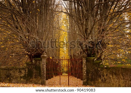 Old rusty gate and wall for an autumn forest