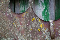 Old rusty iron sheet covered with lichen.