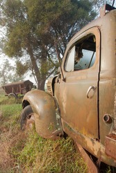 Old rusty truck door and front left fender, laying on a farm amongst tall grass and trees.