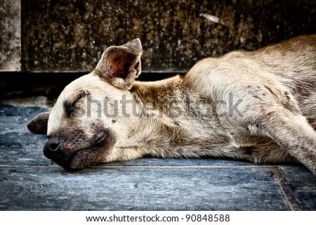 Old sad dog abandoned on the street