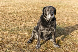 Old sad dog sitting on the meadow. Sad dog eyes. Deserted. The concept of loneliness and old age.
