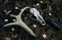 Old scull in enchanted forest. Occult esoteric concept.