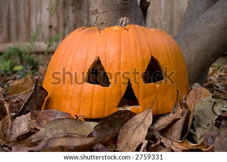 Old shriveled jack-o-lantern pumpkin sitting in a pile of fall leaves