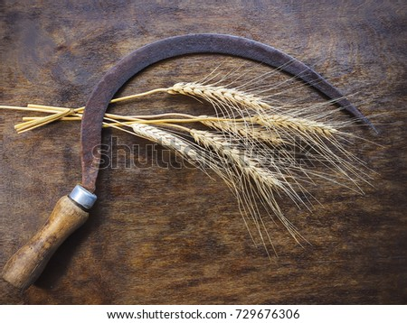 old sickle and ears of wheat on ...