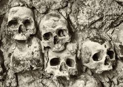 old skulls at a wall