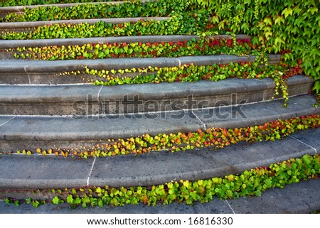 old staircase with ivy