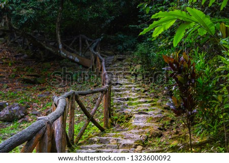 old staircase with stone steps covered with moss and railing from tree branches leads into the wilds of the rainforest
