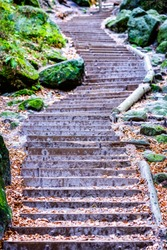 old steps at a forest - photo