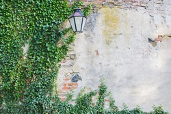 Old stone cracked wall with green ivy plant and lantern