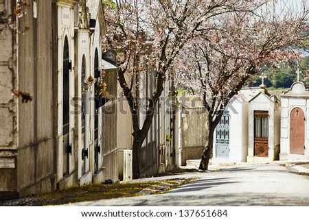 Old stone crypts and blooming trees in spring,  Prazeres Cemetery, Lisbon, Portugal