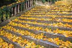 old stone staircase covered with dead yellow leaves
