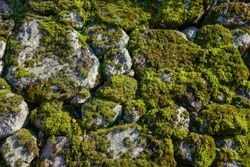 Old stone wall covered with moss at an ancient Buddhist temple in Kyoto, Japan.