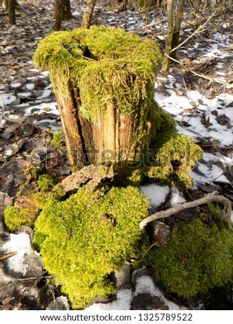 Old stump background. Beautiful nature backdrop. Forest backdrop #1325789522