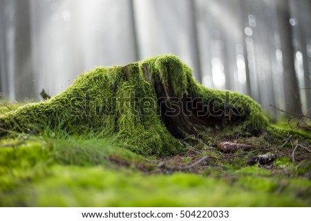 Old stump overgrown with moss