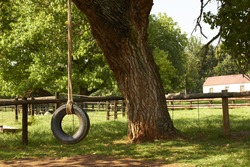 Old style tire swing hanging from a tree with green pasture land in the background on a milk farm