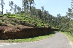Old tea estate with a road in the morning