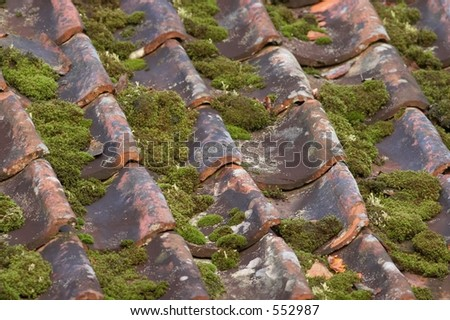 Old tile roof with moss