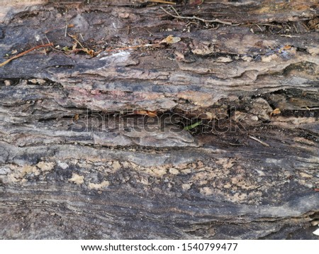 Old Timber texture background. Close-up Old Timber texture background.