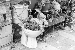 Old toilet seat and ivy on the street.