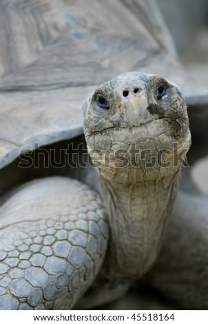 Old Tortoises