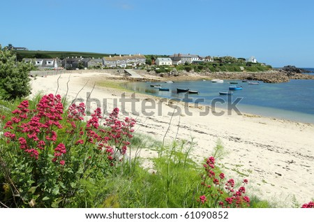 Old town beach red valerian, St. Mary's, Isles of Scilly, Cornwall UK.