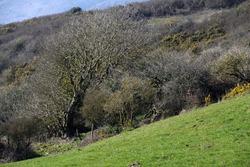 Old tree bent to the wind and slope of the terrain. Vieil arbre courbé au vent et à la pente du terrain.