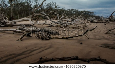 Old tree, branches and other drift wood resting on sand beach in Florida #1050520670