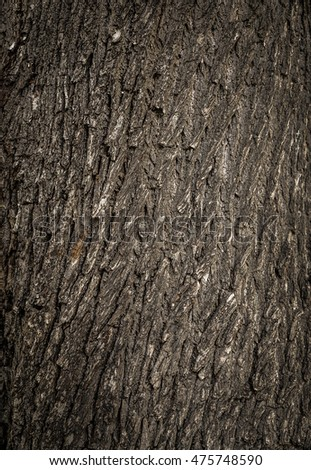 Old tree cracked bark background natural pattern #475748590