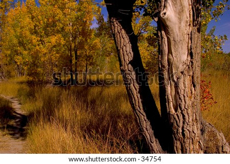 old tree in southern alberta colorful background