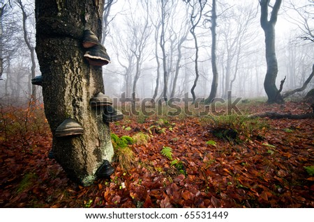 Old tree in the magical misty forest