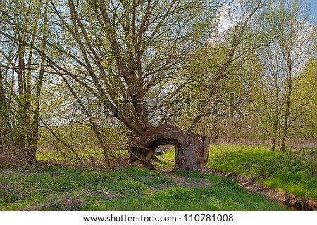 old Tree looks like a Gate - stock photo
