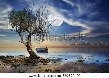 Old Tree on the beach
