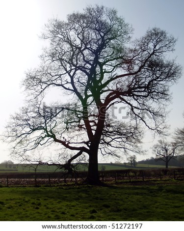Old tree silhouetted in the sunlight