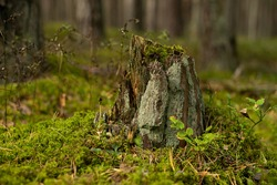 Old tree stump owergrown with moss, lichen and fungi. Shallow depth of field photography.