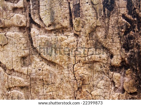 Old Tree Trunk - stock photo