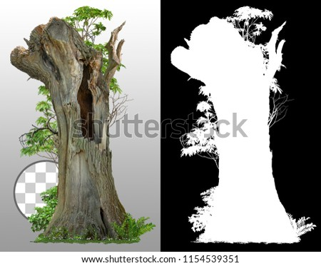 Old tree trunk with a hole isolated on transparent background via an alpha channel of great precision. High quality mask without unwanted edge. High resolution for professional digital composition #1154539351