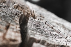 Old tree trunk with annual rings macro