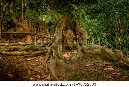 Old tree with a large trunk and large roots above the ground