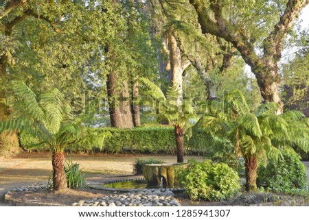 Old trees and fountain, lush green foliage, Alameda park in Santiago de Compostela Galicia Spain Europe.