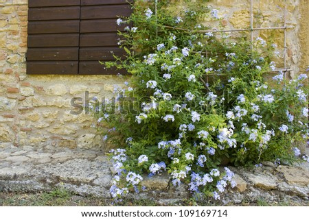 old tuscan wall with window and flowers