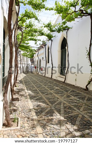 Old vine in the narrow white street of Spanish Andalusia