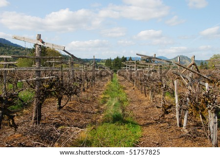 Old vineyard in the Umpqua Valley of Roseburg Oregon in early spring.