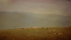 old vintage pastoral landscape with herd of sheep in rain day