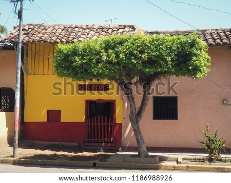 Old vintage style house and tree in Granada, Nicaragua