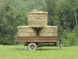 old wagon with hay on prairie