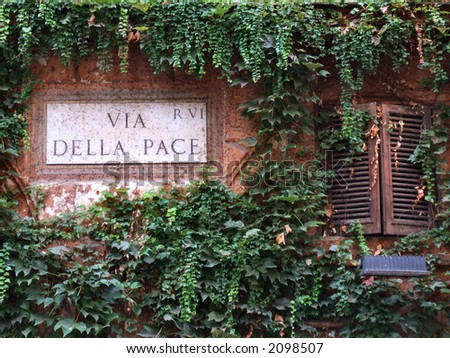 Old wall of a typical building in Rome. Vine covered wall. - stock photo